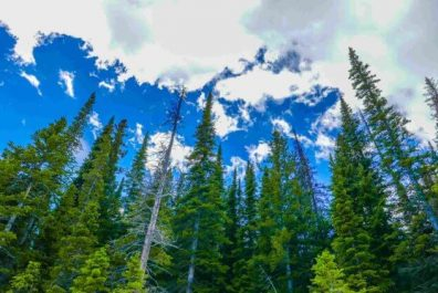forest_matter_one-750x422