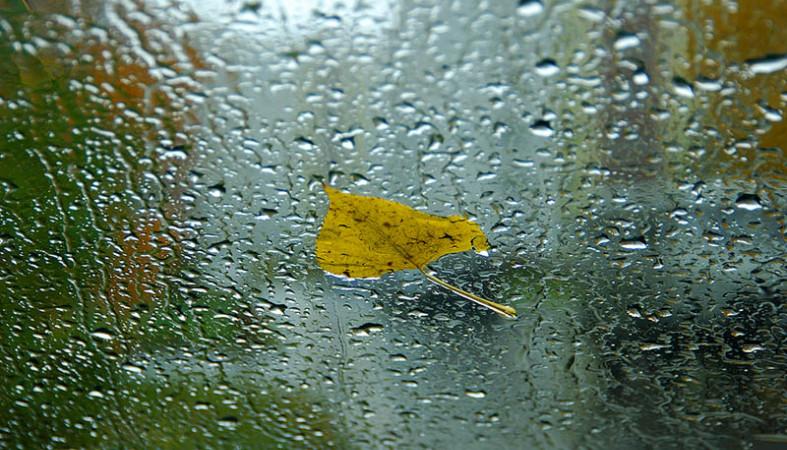 Найближчими днями очікується дощова погода з нічними заморозками