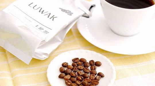 Kopi luwak: o πιο ακριβός καφές από κόπρανα αγριόγατας