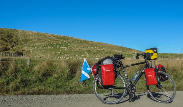 Many many sheep and a Scottish flag.