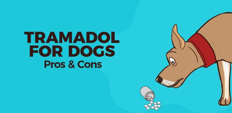What is Tramadol for Dogs ?