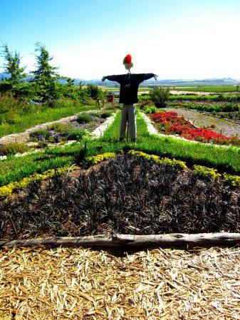 South African garden!!!