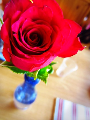 My beautiful rose from HWTHB!!! :)