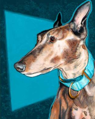 Rynn greyhound portrait