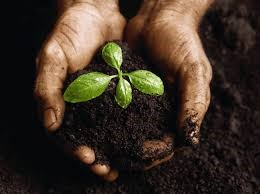 God is willing to dig in the dirt of our lives