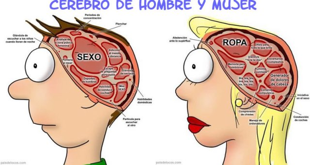 cerebro-hombre-y-mujer-011