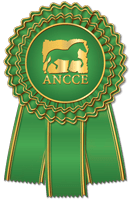 Young Recommended Breeding Stock for Dressage