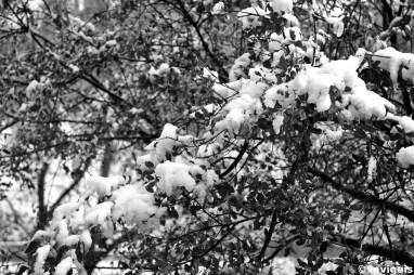 snowy tree#2_©xavigeis