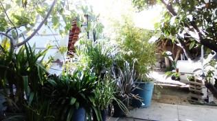 thaita-backyardjuly2014 (10)