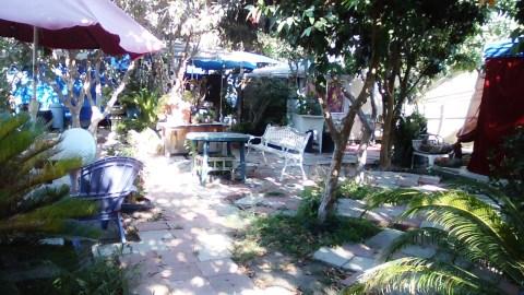 thaita-backyardjuly2014 (7)