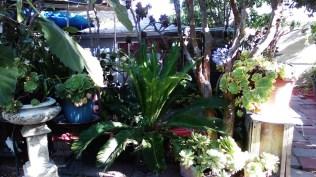 thaita-backyardjuly2014 (9)