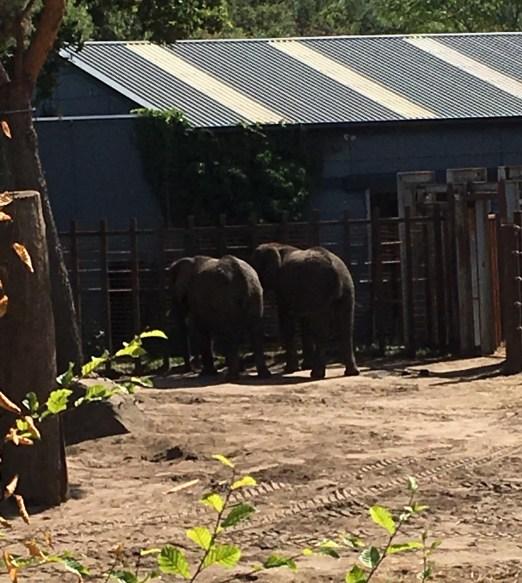 olifanten Beekse Bergen