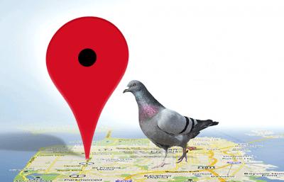 pigeon de Google