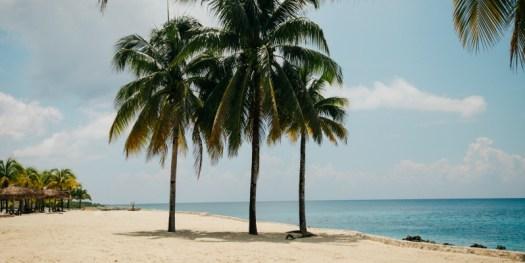 Mexico palms Xclusivity