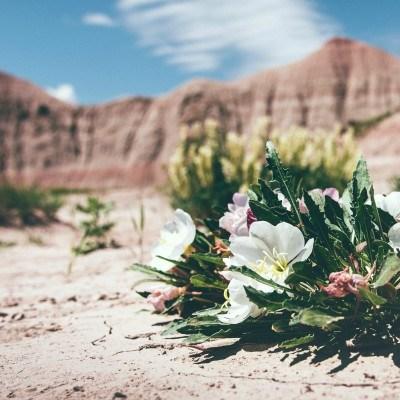 Mexico flowers Xclusivity