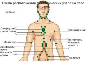 лимфна система в човешкото тяло