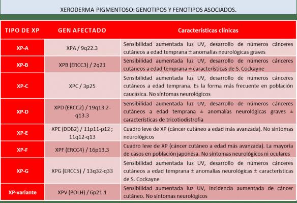 XP genotipos y fenotipos asociados