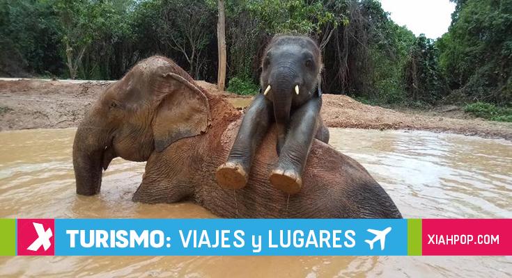 Abre un nuevo santuario de elefantes en Pattaya