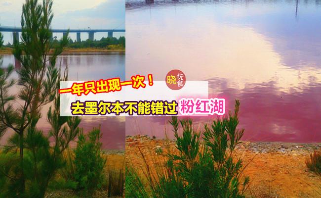 【少女梦幻粉红湖,就在墨尔本!】一年只出现一次,超Pink滴,美美哒~错过了就要等明年!