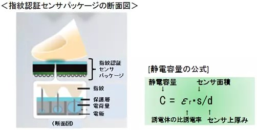 静電容量式指紋センサーの仕組み