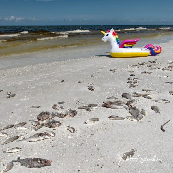 #1 Beach In America Siesta Key 08.02.18 Mize