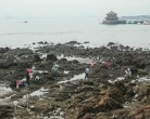 People on the rocky beach with famous Zhanqiou Pier in the background.