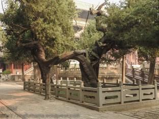 Dai Miao: Kick-boxing trees.