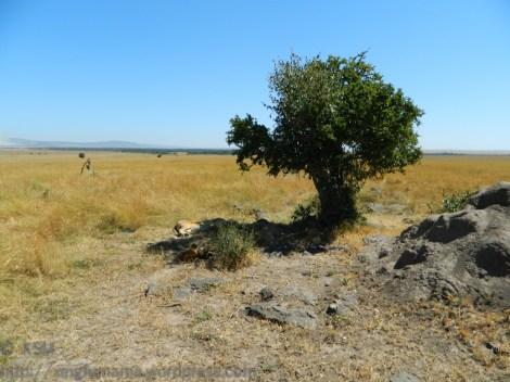 ksm-20120213-african_tree_shadows-01