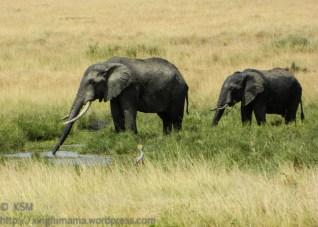 ksm-20120213-elephant-01