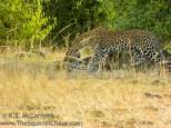07-20120214-Wild_Mothers