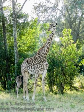 16-20120215-Wild_Mothers