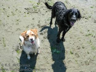 20120816-KSM-Puppy_Friends