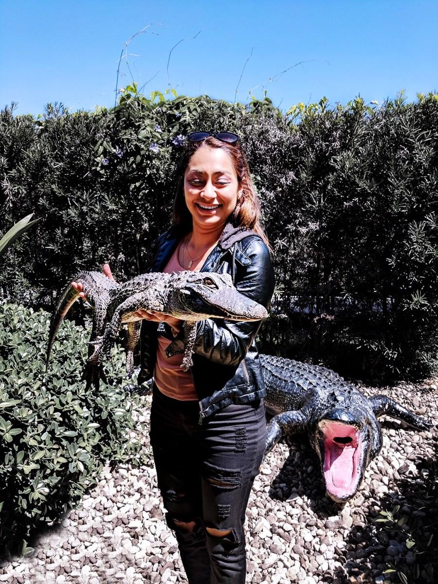 everglades holding a gator