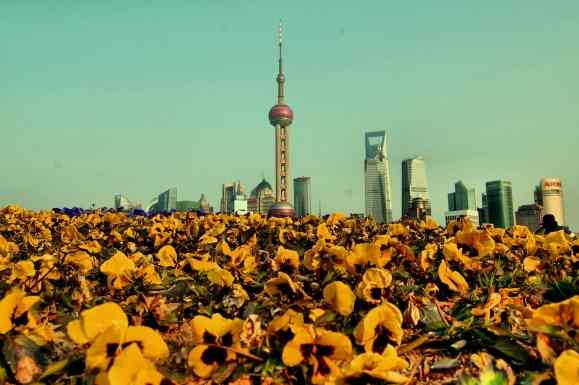 Shanghai - Flores y rascacielos