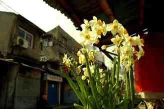 Shanghai - Flores y casas
