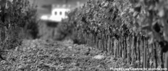 La tierra, el viñedo y la casa