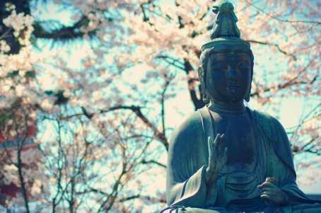 Buda y Hanami