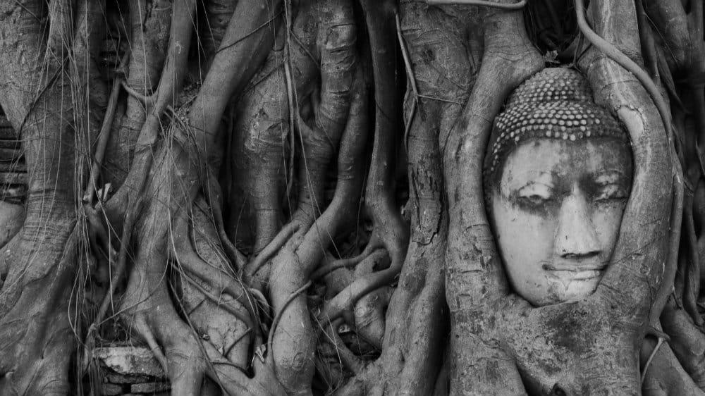 Cabeza de Buda en la raíces del Wat Mahathat, Ayutthaya