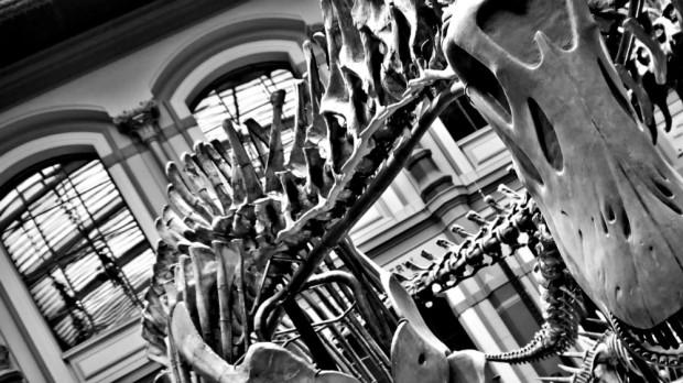 Hall de los dinosaurios, Naurkunde Museum Berlín