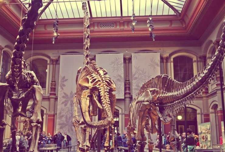 Museo de Ciencias Naturales de Berlín