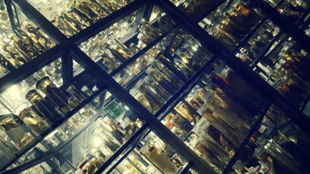 Peces en formaldehido - Museo de Ciencias Naturales de Berlín