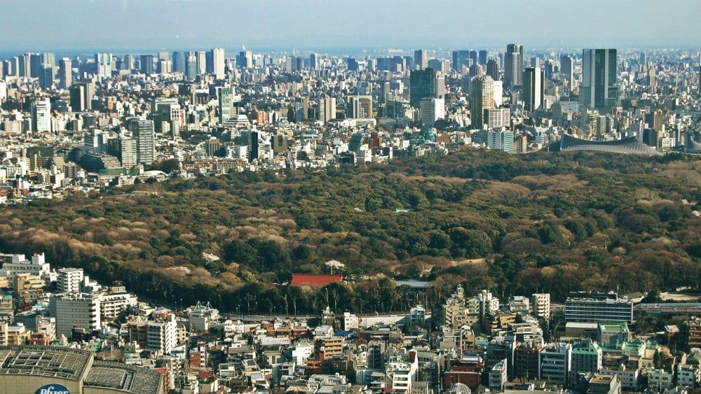 Vista del Parque Yoyogi desde el Metropolitan Building - Qué ver en Tokio