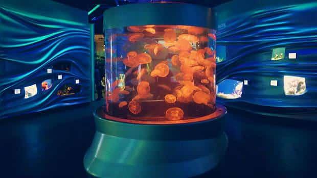 Tanque de medusas