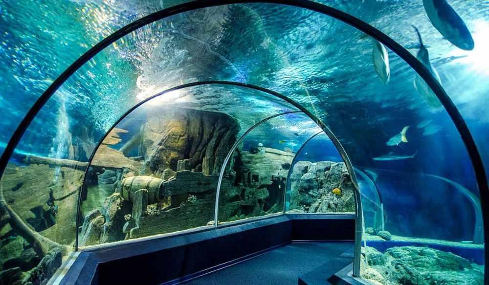 Mejores zonas donde alojarse en Sochi - Cerca del Discovery World Aquarium