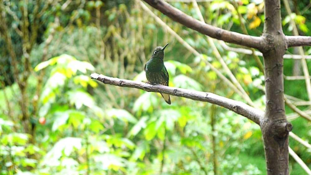 Intento #1503 de fotografiar a un colibrí