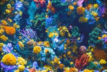Viajes de buceo, una forma diferente de viajar