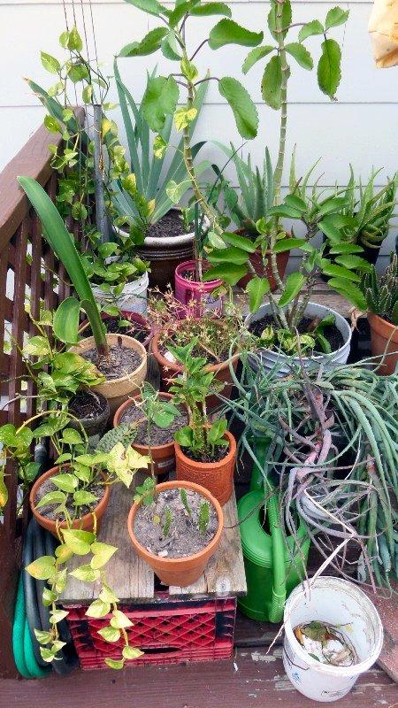 garden16-4