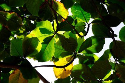 Temple tree @ Temple Tree Hotel & Spa - Bentota