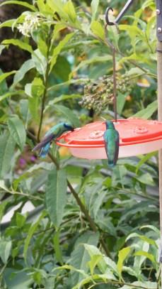 店家會擺設這種蜂鳥專用餵食器