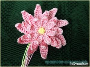 Кувшинка (водяная лилия). Вязание крючком.
